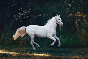 HOW TO LOVE LIKE A HORSE